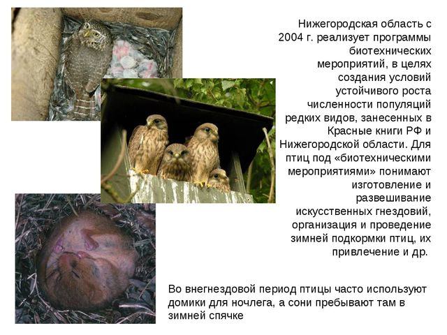Нижегородская область с 2004 г. реализует программы биотехнических мероприяти...