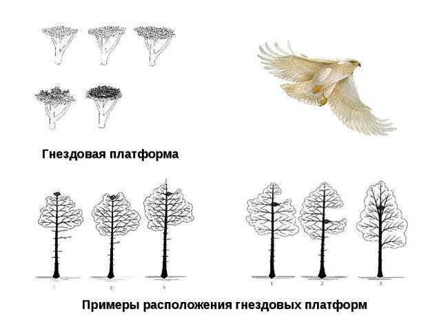 Примеры расположения гнездовых платформ Гнездовая платформа