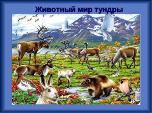 Животный мир тундры