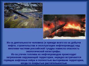 Из-за деятельности человека (и прежде всего из-за добычи нефти, строительства