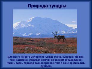 Природа тундры Для всего живого условия в тундре очень суровые. Но всё-таки н