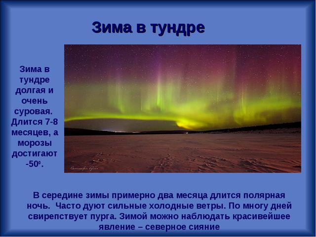 Зима в тундре Зима в тундре долгая и очень суровая. Длится 7-8 месяцев, а мор...