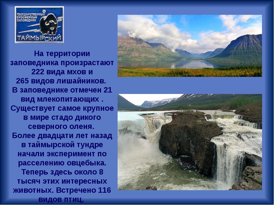На территории заповедника произрастают 222 видамхови 265видовлишайников....