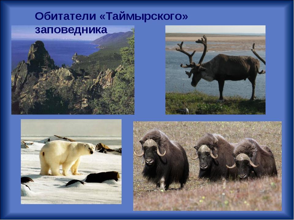 Обитатели «Таймырского» заповедника