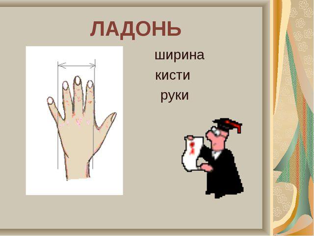 ЛАДОНЬ ширина кисти руки