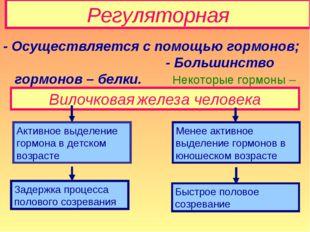 Регуляторная - Осуществляется с помощью гормонов; - Большинство гормонов – бе
