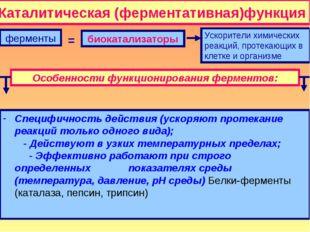 Каталитическая (ферментативная)функция ферменты биокатализаторы Ускорители хи