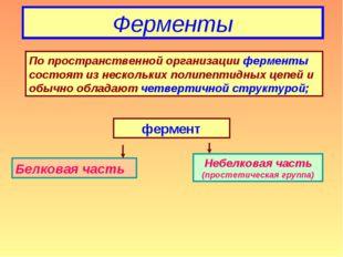 Ферменты По пространственной организации ферменты состоят из нескольких полип