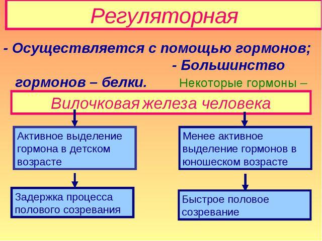 Регуляторная - Осуществляется с помощью гормонов; - Большинство гормонов – бе...