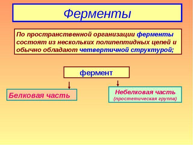 Ферменты По пространственной организации ферменты состоят из нескольких полип...