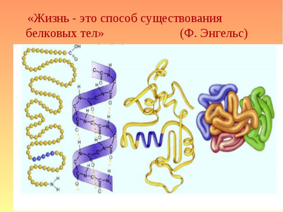«Жизнь - это способ существования белковых тел» (Ф.Энгельс)