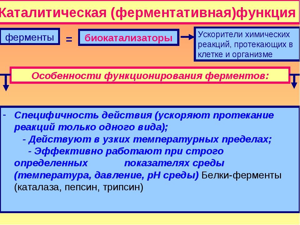 Каталитическая (ферментативная)функция ферменты биокатализаторы Ускорители хи...