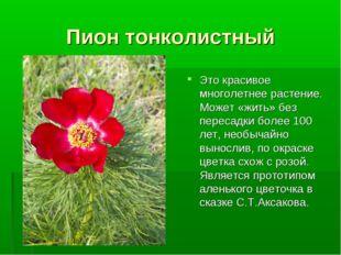 Пион тонколистный Это красивое многолетнее растение. Может «жить» без пересад