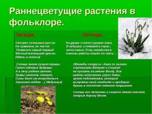 Раннецветущие растения в фольклоре. Загадки Легенды Смотрит солнышко росток Н