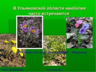 В Ульяновской области наиболее часто встречаются Мать-и мачеха Медуница Сон-