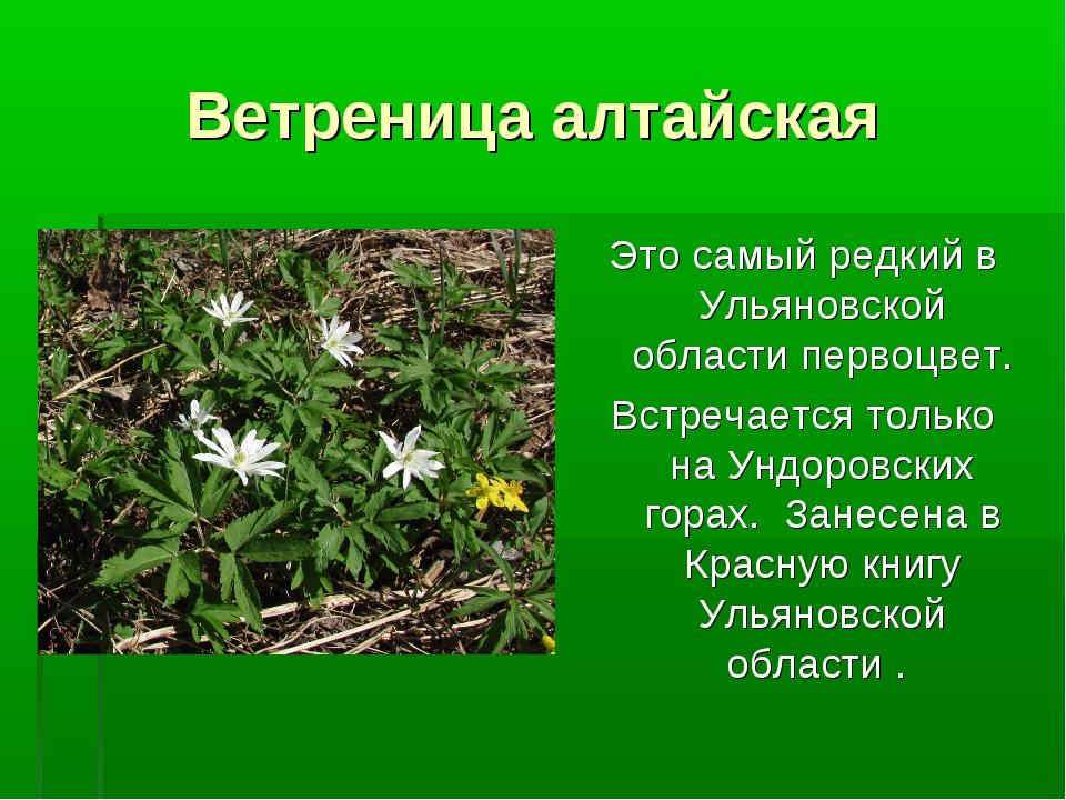 Ветреница алтайская Это самый редкий в Ульяновской области первоцвет. Встреча...
