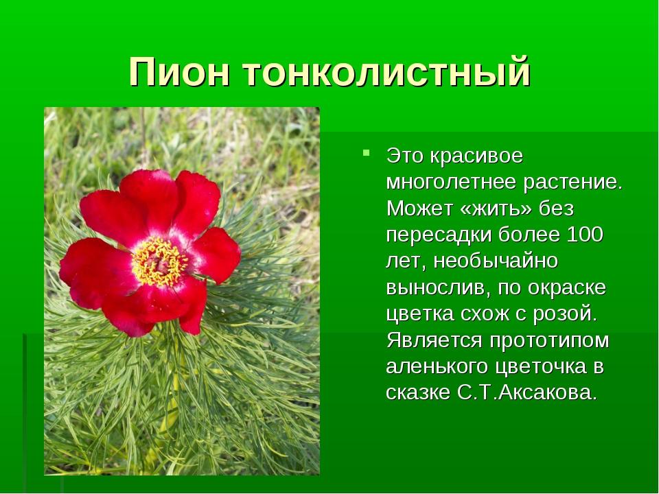 Пион тонколистный Это красивое многолетнее растение. Может «жить» без пересад...