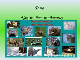 Тема: Как живут животные