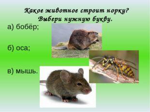 Какое животное строит норку? Выбери нужную букву. а) бобёр; б) оса; в) мышь.