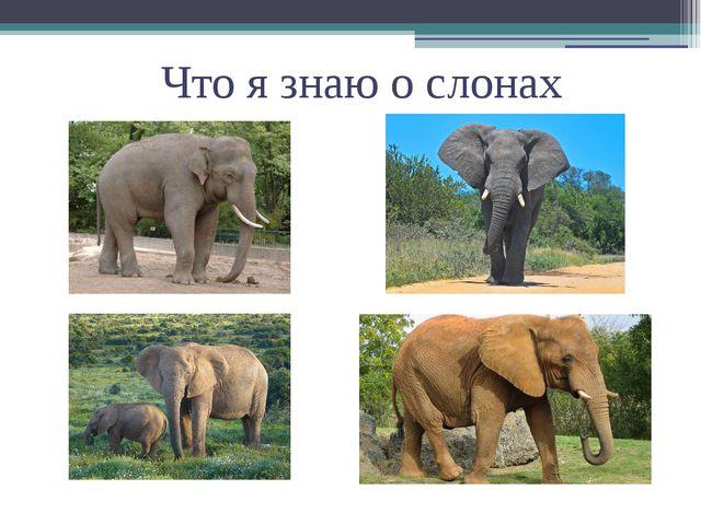 Что я знаю о слонах
