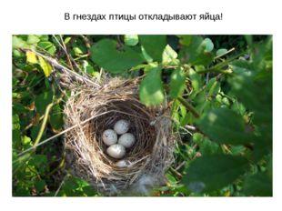 В гнездах птицы откладывают яйца!