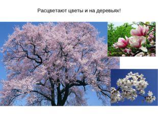 Расцветают цветы и на деревьях!