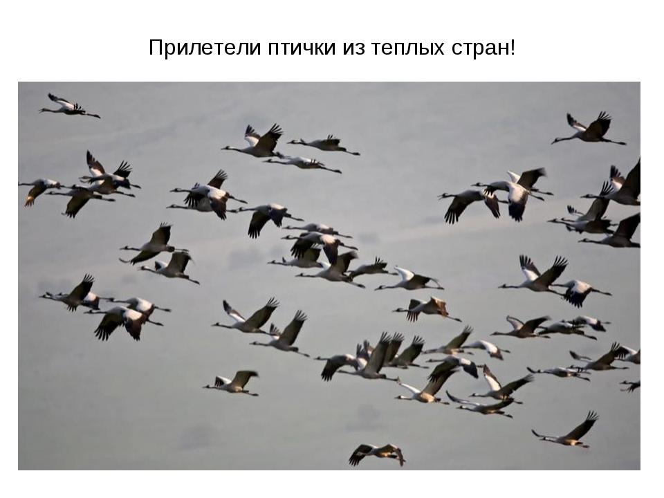 Прилетели птички из теплых стран!