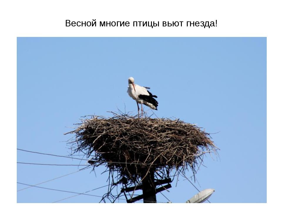 Весной многие птицы вьют гнезда!