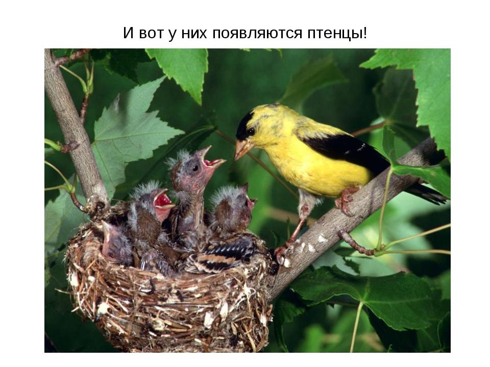 И вот у них появляются птенцы!