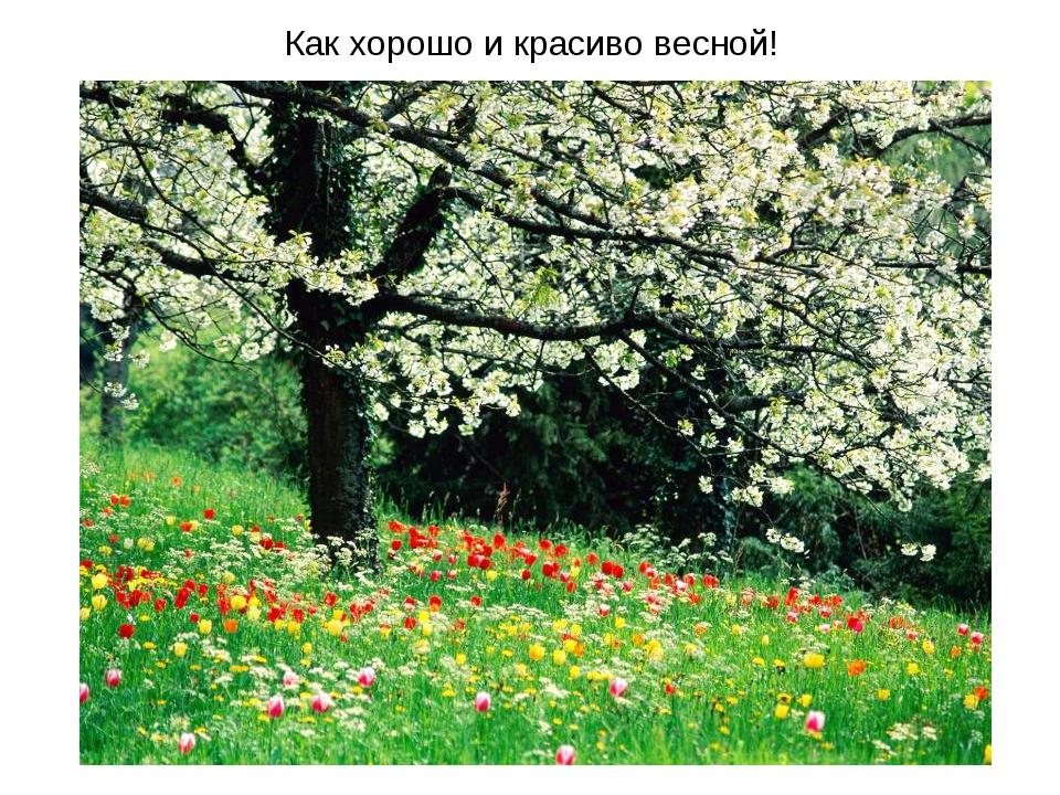 Как хорошо и красиво весной!