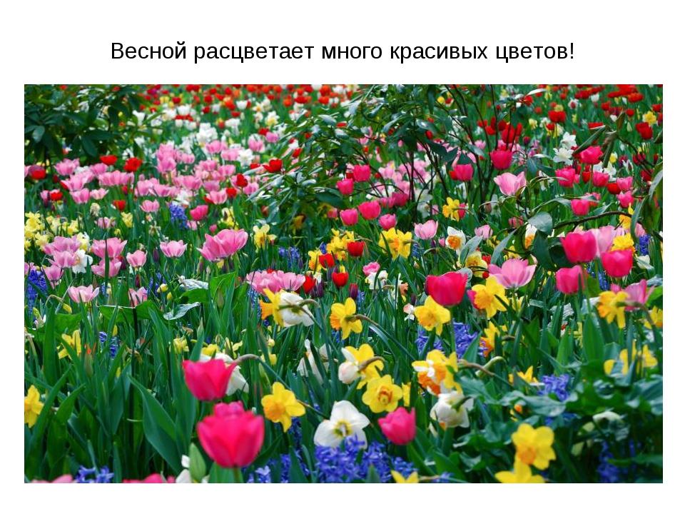 Весной расцветает много красивых цветов!