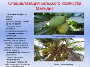 Специализация сельского хозяйства Мальдив Сельское хозяйство развито слабо. Д