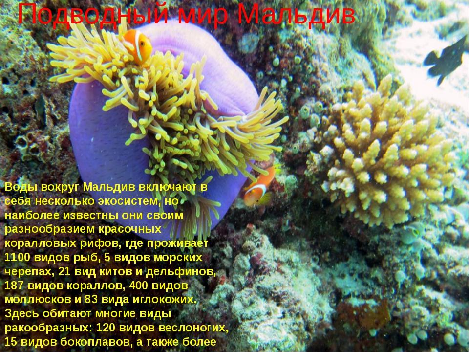 Подводный мир Мальдив Воды вокруг Мальдив включают в себя несколько экосисте...