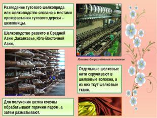 Разведение тутового шелкопряда или шелководство связано с местами произрастан