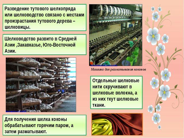 Разведение тутового шелкопряда или шелководство связано с местами произрастан...