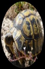 C:\Users\админ\Desktop\черепаха.jpg