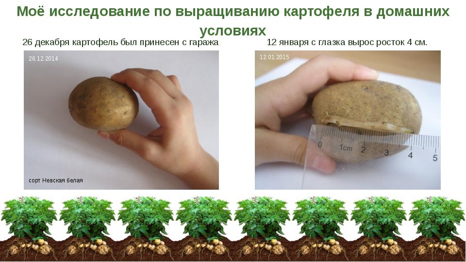 Картофель по домашнему в домашних условиях