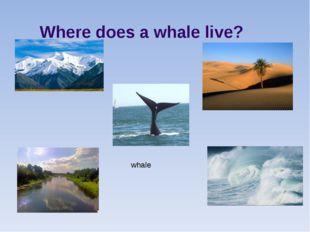 Where does a whale live? whale