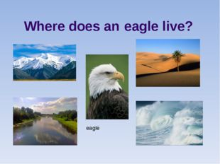 eagle Where does an eagle live?
