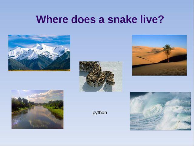 Where does a snake live? python
