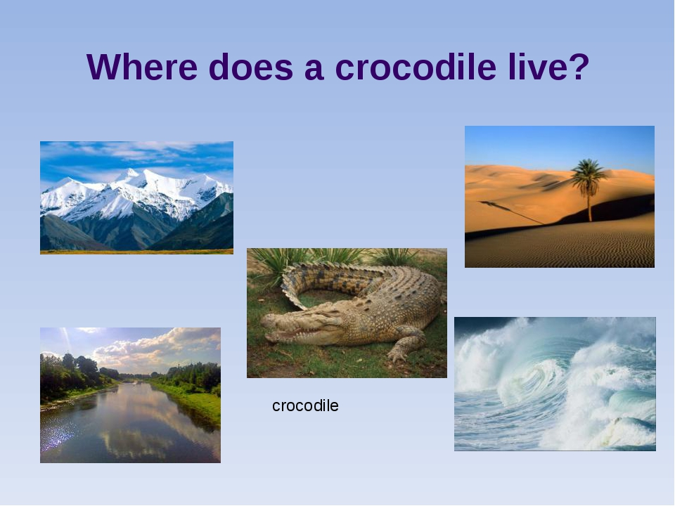 crocodile Where does a crocodile live?