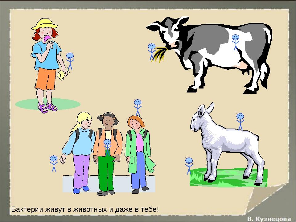 Бактерии живут в животных и даже в тебе!