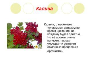 Калина Калина, с несколько «угрюмым» запахом во время цветения, не каждому бу