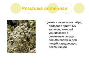 Ромашка аптечная Цветёт с июня по октябрь, обладает приятным запахом, который