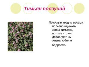Тимьян ползучий Пожилым людям весьма полезно вдыхать запах тимьяна, потому чт