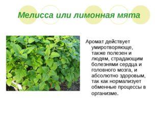 Мелисса или лимонная мята Аромат действует умиротворяюще, также полезен и люд