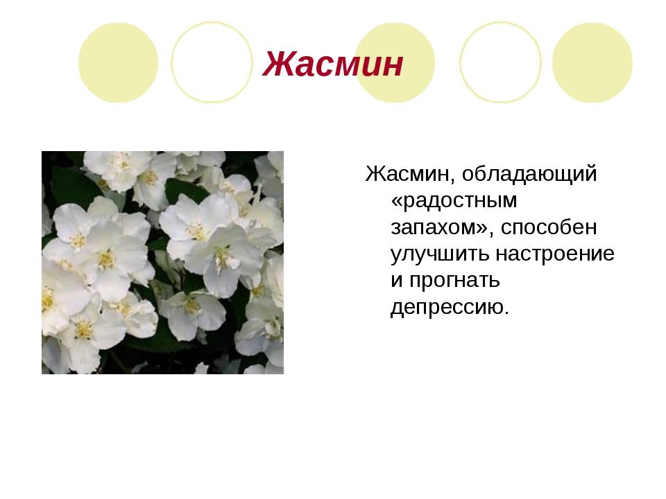 Жасмин Жасмин, обладающий «радостным запахом», способен улучшить настроение и...