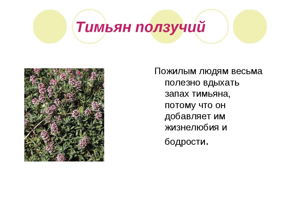 Тимьян ползучий Пожилым людям весьма полезно вдыхать запах тимьяна, потому чт...