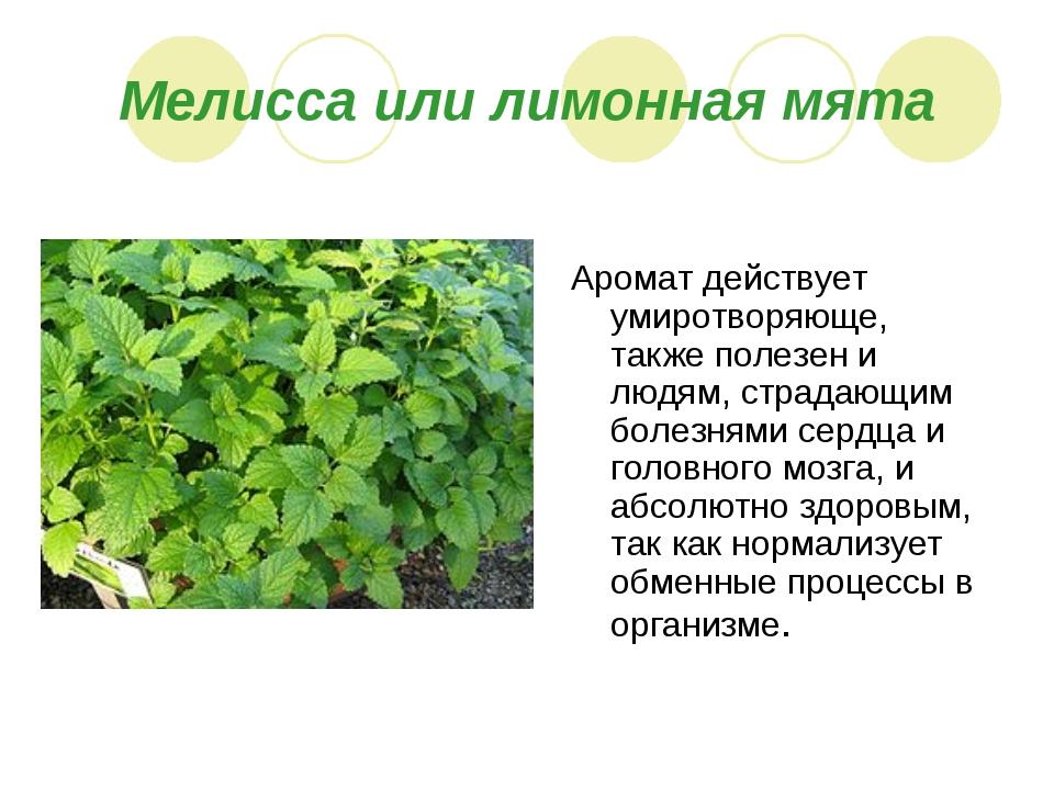 Мелисса или лимонная мята Аромат действует умиротворяюще, также полезен и люд...