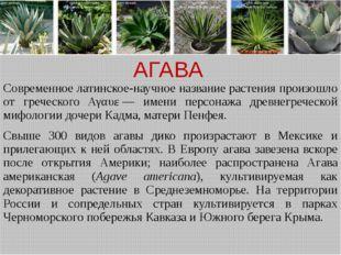 АГАВА Современное латинское-научное название растения произошло от греческого